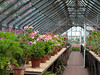 Filled Greenhouses 2573 (Thorbard) Tags: plants plant garden gardening victorian somerset greenhouse growing nationaltrust tyntesfield