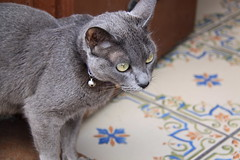 cats of Andalusia (Kristel Van Loock) Tags: travel cats animal animals cat chats spain katten kat chat europa europe gatos andalucia gato costadelsol katze andalusia animaux andalusien gatto losgatos viaggio gatti animali spanien spagna spanje andalousie katt gattino spagne citytrip andaluzia andalusi cutecate zuidspanje zuideuropa march2016