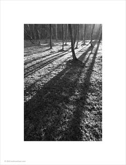Tree Shadows (Ian Bramham) Tags: trees photo nationalpark shadows peakdistrict silverbirch ianbramham