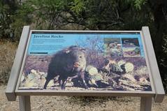 0U1A6799 Saguaro National Park - Rincon Mountains - Javelina Rocks interpretive sign (colinLmiller) Tags: arizona mountains sign tucson nps east np nationalparkservice saguaronationalpark rincon doi 2016 interpretivesign unitedstatesdepartmentoftheinterior