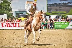Pintos_Equitana_2016-9926 (tokerpress) Tags: messe pferde shou pintos tokerpress alexandertoker equitanaopenair ctokerpress2016 gestütgoldenepintos