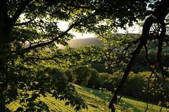 A Spring evening near Froncysyllte. (Mat Price) Tags: trees eveningsun froncysyllte canon1740mm canon70d