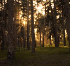 DSC_2965 (konstantinshiryaev) Tags: sunset nature landscape nikon d610