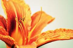 (zool18) Tags: red orange flower macro beauty canon garden eos good 7d botanic