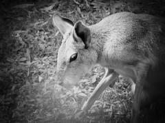 Passing Buenos Aires Zoo Along Av. Sarmiento (Andrew Milligan Sumo) Tags: zoo buenos aires passing along av sarmiento