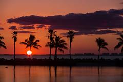 Palm Sunrise (jazzyoki) Tags: longexposure sky sun lake reflection beach birds silhouette clouds sunrise palms florida