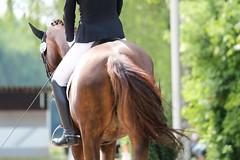 IMG_1394 (dreiwn) Tags: horse pony horseshow pferde pferd equestrian horseback reiten horseriding showjumping dressage reitturnier dressur reitsport dressyr ilsfeld dressuur ridingclub junioren ridingarena pferdesport springreiten reitplatz reitverein dressurreiten dressurpferd dressurprfung tamronsp70200f28divcusd jugentturnier