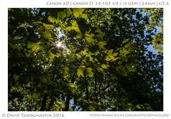2016_05_15_15883_LR_upd (dthrog00) Tags: leaves illinois flare 6d matthiessenstatepark 24105l