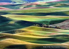 Magic Hills (Gary Grossman) Tags: landscape evening spring farmland hills pacificnorthwest goldenhour chickpeas breadbasket palouse winterwheat steptoebutte garygrossmanphotography shotsofawe