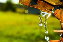 DSC_0366 (Azezra) Tags: d3300 nikondd3300 water sprinkler green wet nikon macro bokeh nature chewelahwa rust rusty light flare