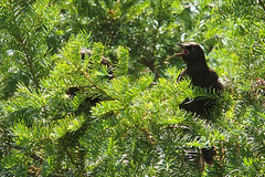 P7070294B (The Real Maverick) Tags: torontoparks highpark toronto ontario canada summer olympusstylus1