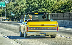 WEEE! (akahawkeyefan) Tags: chevrolet yellow hippies hair funny wind convertible pickup highway99 davemeyer