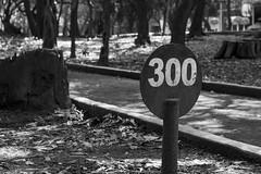 300 (lbraun91) Tags: 300 blackandwhite blackandwhitephotography chapultepec chapultepecpark mexico mexicocity nature number relax running runningtrack sports trees
