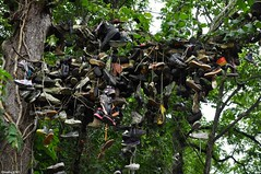 Anyone need a shoe? (or two, or three?) (Jake (Studio 9265)) Tags: shoe tree milltown indiana usa united states america country rural unusual art hillbilly old smelly sneakers abandoned tossed thrown nikon d5000 weird offbeat unconventional close up leaves hanging decay