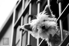 Quienes viven en la Magdalena? Portada (Soulex Photos) Tags: canon blanco negro bw dog barrio