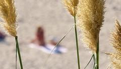 Essai de flou artistique sur la plage naturiste d' Hendaye ( 1er version ) (thierry llansades) Tags: flou hendaye plage beach nature naturiste naturisme euskadi nue nu nude sexy girl fouin foin sable sun ocean atalntique atlantic art teen teens nkk naturtrane nudiste nudisme nudista nudisti fkk paysbasque pas pays bayonne biarritz irun espagne espgna espagna 64 bidard voyeur exhib