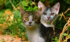 cats (bilal gldoan) Tags: cats cat animal doal doa kedi kediler yaam yeil yellow yaprak eyes outdoor orman ot aa animals pet kitten