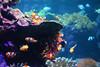 DSC_1628 (Daphne Wolfsong) Tags: clownfish clownfishes tropical fishes tropicalfishes water sea waterscape seascape aquatic life aquaticlife deepsea colors colorful beautiful animals
