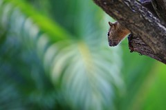 Jump or Not Jump? (168tos) Tags: animal wildlife squirel nature