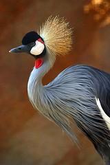 Beauty of God's Creations - World of Birds – Cranes - By Amgad Ellia 03 (Amgad Ellia) Tags: world beauty birds by cranes gods amgad ellia creations –