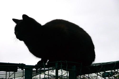 2591 The Black cat