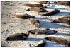 Easy life (Olivia Heredia) Tags: california winter usa naturaleza beach nature us unitedstates sandiego playa lajolla socal invierno sealions hdr highdynamicrange lajollacove leonesmarinos tonemapped tonemapping 1exp oliviaheredia oliviaherediaotero