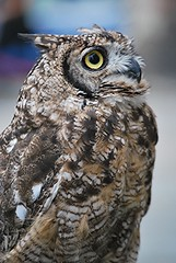 "Anacleto (wallace39 "" mud and glory "") Tags: bird owl uccello autofocus gufo rememberthatmomentlevel1 rememberthatmomentlevel2 infinitexposure"