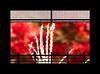 "Japanese silver grass (karakutaia) Tags: sun tree love nature japan paper temple japanese tokyo heart superb card e simply sogno rockpaper afotando ""flickraward"" flickrglobal elementsorganizer allbeautifulshotsandmanymoreilovenature flowerstampblackandwhite transeguzkilorestreetarturbanagreatshotthisisexcellentcontestmovementricohgxr""serendipitygroupbluenatureicapture flickraward5""j tra realtabstract"