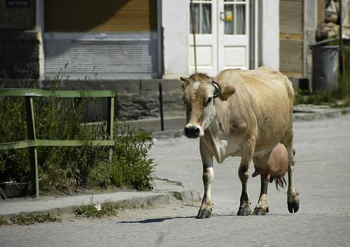 2008 Bulgarije 0766 Batak