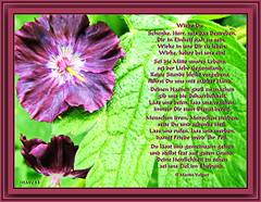 Wirke Du! (Martin Volpert) Tags: flower fleur jesus flor pflanze blumen blomma christianity blume bibbia fiore blte blomst bibel virg christus lore bloem heil blm iek floro kwiat flos ciuri kvet kukka cvijet flouer christentum blth cvet zieds is floare blome iedas herrlichkeitgottes mavo43 gedichtkarte poemcard hochzeitsgedicht poemtoawedding