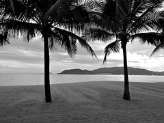 Nha Trang, Vietnam (Deb Jones1) Tags: ocean bw seascape nature beauty silhouette canon palms australia vietnam palmtrees southchinasea nhatrang