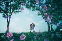 ... -like a cinema (Hodaka Yamamoto) Tags: park autumn flower tree fall silhouette lomo lca lomography doubleexposure farm double multipleexposure tungsten cosmos doubles multiexposure cine400