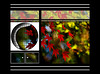 "The last red world (karakutaia) Tags: sun tree love nature japan paper temple japanese tokyo heart superb card e simply sogno rockpaper afotando ""flickraward"" flickrglobal elementsorganizer allbeautifulshotsandmanymoreilovenature flowerstampblackandwhite transeguzkilorestreetarturbanagreatshotthisisexcellentcontestmovementricohgxr""serendipitygroupbluenatureicapture flickraward5""j tra realtabstract"