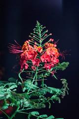 A Nice Flower   (haidarism (Ahmed Alhaidari)) Tags: flower nature beautiful nice