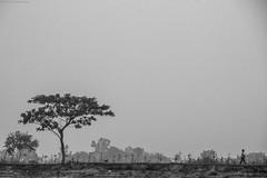 Untitled (royudoys) Tags: dog man tree landscape lonely