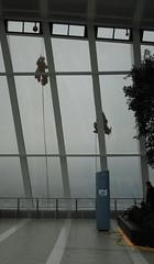 Skygarden, January 2015 (roger.w800) Tags: park london gardens garden palms ferns riverthames skygarden cityoflondon fenchurchstreet cycads londonskyline publicpark londonarchitecture 20fenchurchstreet londonbuilding publicopenspace viewsoflondon parkinacity