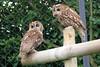 Birds to Sort at Devon Wildlife Rescue Centre. Taken on 19-06-2011 - 10_51_53.jpg (atthezoouk) Tags: camera england birds devon newtonabbot zoos animalphotos canoneos350ddigital devonwildliferescuecentre