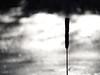 The reed (John P Norton) Tags: manual f56 11250sec focallength300mm lumixgvario100300f456 olympusem10 copyright2015