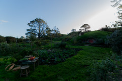 Hobbit hole (David Mecys) Tags: newzealand northisland thehobbit hobbiton thelordoftherings newzealand2016