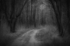 *** (pszcz9) Tags: las blackandwhite bw tree nature monochrome forest landscape sony poland polska droga a77 przyroda drzewo beautifulearth pejza