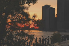 Brooklyn Bridge Park Sunset (music_man800) Tags: park new york city nyc bridge trees sunset sky urban orange usa sun holiday reflection building tree nature colors beautiful yellow pine brooklyn skyscraper canon reflections river photography evening march pier spring twilight focus warm pretty colours afternoon dusk walk manhattan united creative east american hudson states colourful edit barges ameican gimp2 700d
