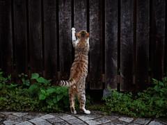 . (rampx) Tags: cat pentax    645z