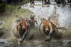 37_20160315-171415-_DSC5501 (trueforever) Tags: indonesia ibis bukittinggi padang novotel pagaruyung minangkabau jamgadang lembahharau westsumatera batusangkar tanahdatar ngaraisianok padangpanjang pacujawi padangpariaman