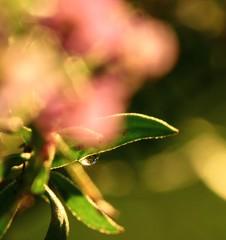 nurture your spark.... (dawn.tranter) Tags: flowers light macro love bokeh spirit compassion dewdrop dreamy spark understanding dawntranter activeassignmentwater