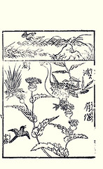 Top  common snipe; Bottom  thistle, bean goose and unknown bird (Japanese Flower and Bird Art) Tags: flower bird japan japanese book thistle picture bean goose common anonymous cirsium asteraceae anser woodblock ukiyo snipe anatidae gallinago scolopacidae fabalis readercollection