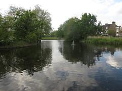 Pond, Wandsworth Common (John Steedman) Tags: uk greatbritain england london heron pond unitedkingdom ardeacinerea wandsworth greyheron grossbritannien  wandsworthcommon    grandebretagne