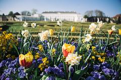 Herrenhuser Grten III (Javier Pimentel) Tags: flowers flores gardens germany de deutschland spring jardin hannover alemania niedersachsen herrenhusergrten herrenhuser herrenhausergardens herrenhusergarten