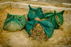 (Dubai Jeffrey) Tags: street grass leaves dubai sack szr cuttiings