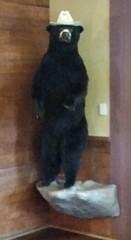 Colton's in Springfield, Missouri (Adventurer Dustin Holmes) Tags: taxidermy blackbear 2016 bearwearingahat coltonsspringfieldmo blackbearwearingahat blackbearwearingacowboyhat coltonsspringfieldmissouri bearinacowboyhat