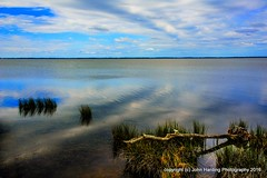 The Sound After The Storm (T i s d a l e) Tags: summer september outerbanks seagrass easternnc tisdale 2016 curritucksound cypresstrunk thesoundafterthestorm